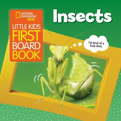 Little Kids First Board Book Insects