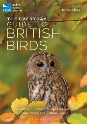 Everyday Guide to British Birds, The: Identify our common sp...